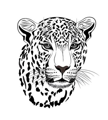 Тигр Снежный барс Felidae Амурский леопард Рисунок, Леопарды ... | 397x357