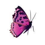 Татуировка переводная «Бабочка»