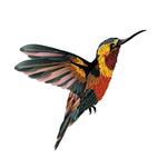 Переводная татуировка «Колибри»